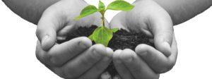 Green plant in a child hands on dark background